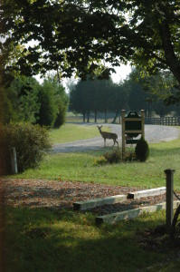 The farm and surrounding acreage are home to countless wildlife
